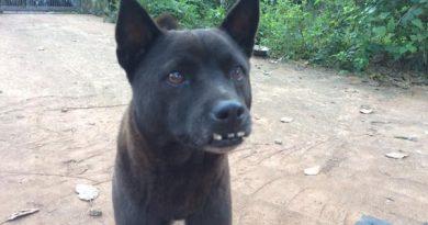 Ngủ mơ thấy chó đen đánh con gì dễ trúng?