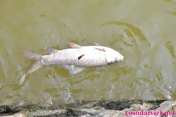 Giải mã giấc mơ thấy cá chết là điềm báo tốt hay xấu