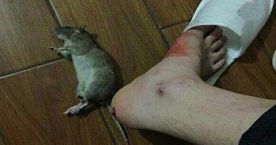 Bị chuột cắn là điềm gì, tốt hay xấu