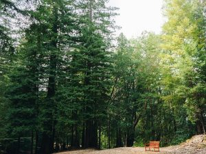 Mơ thấy rừng rậm là điềm báo lành hay dữ?